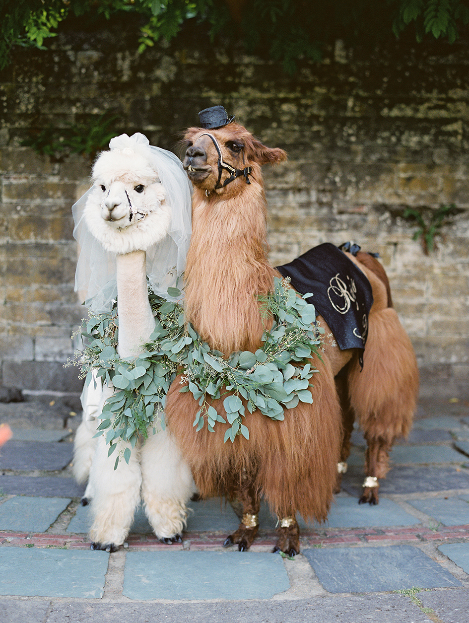 The llamas posing at the photo booth.