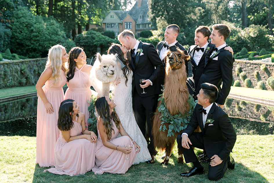 The wedding party poses with the llamas.