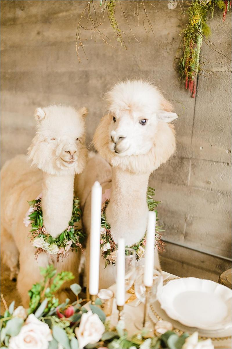 styled shoot, alpaca, wedding, oregon wedding, oregon bride, wedding alpacas, wedding inspo