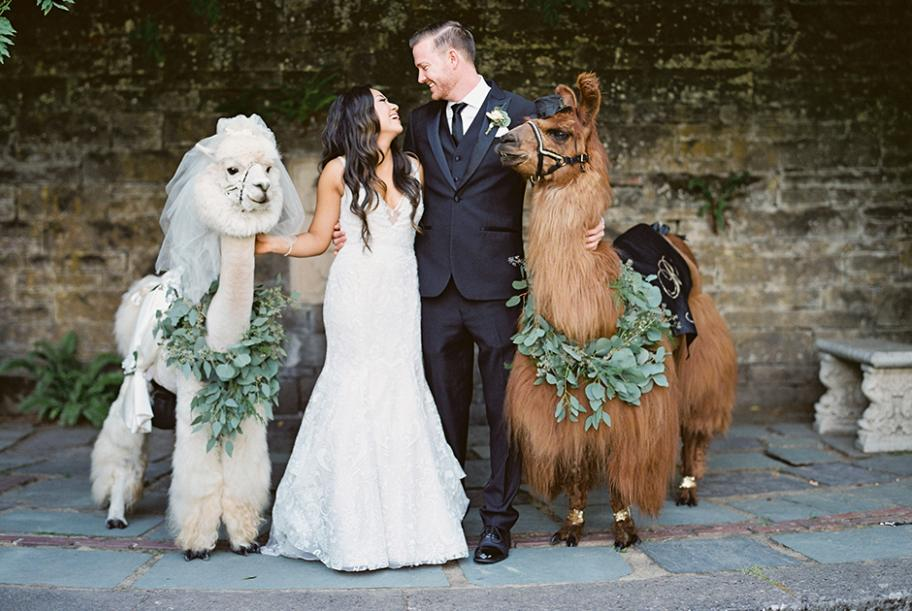Stephanie and Nyles pose with llamas at their Fir Acres Estate Gardens wedding.