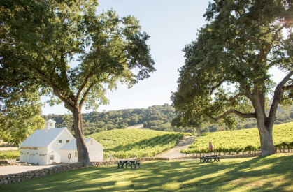 Hammersky Vineyard, Photo: Allyson Magda