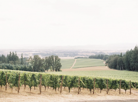 Vista Hills Vineyard, Photo: Amanda K